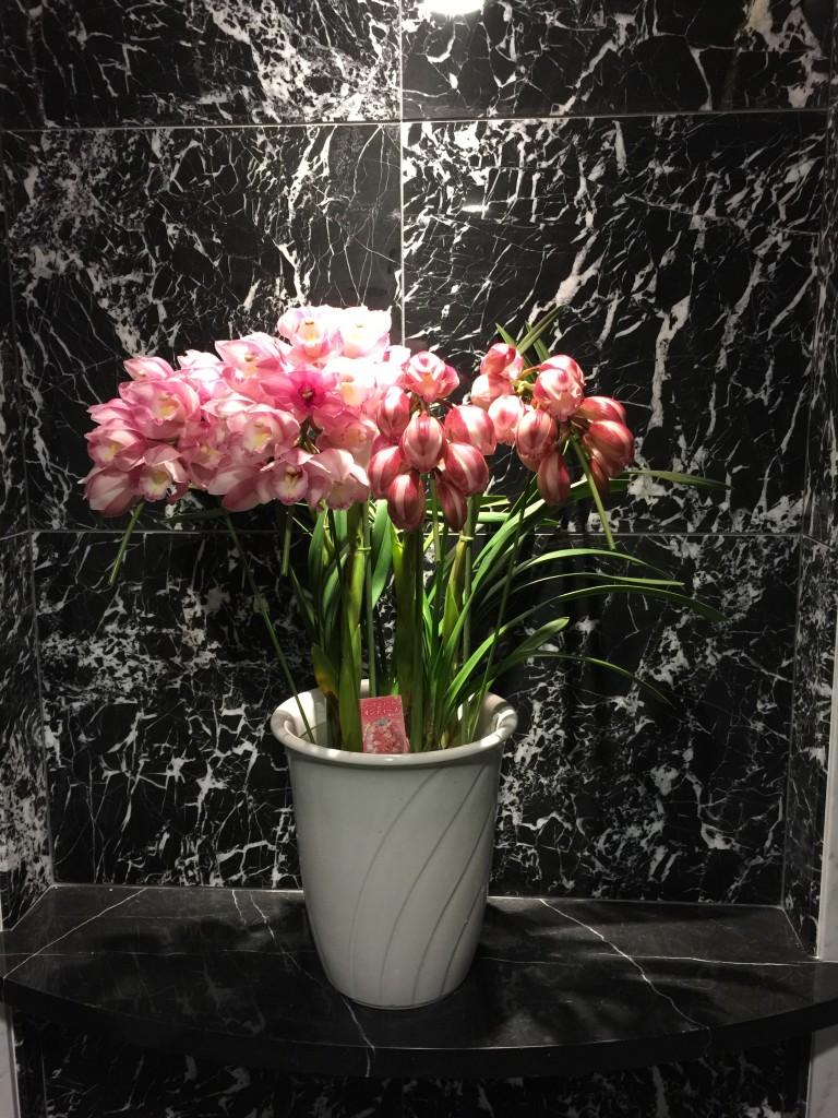 事務所ビルのエントランスの花が変わりました。
